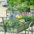 初夏の花車