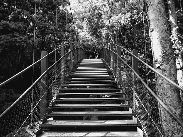 この吊り橋を渡って…