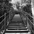 写真: この吊り橋を渡って…