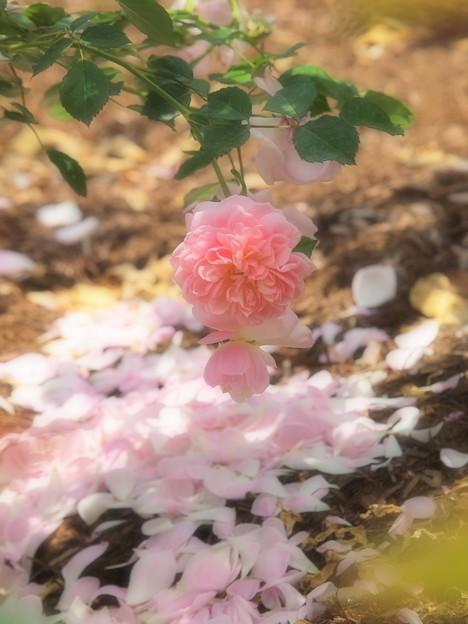 大地に咲く