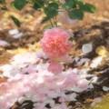 写真: 大地に咲く