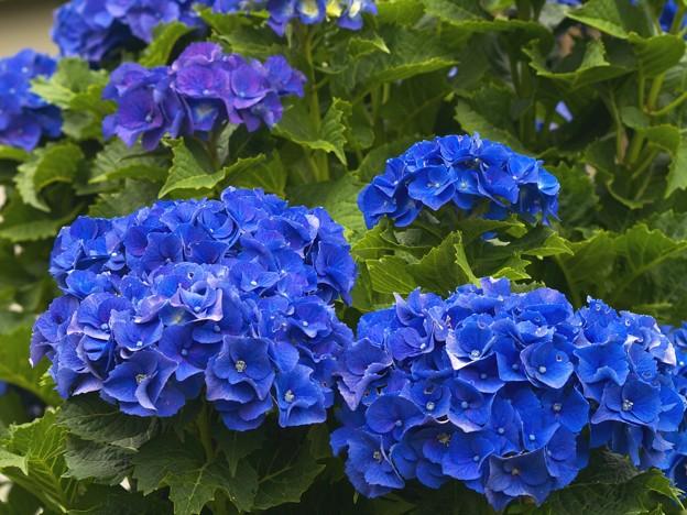 コーポレートカラーはブルー type-a