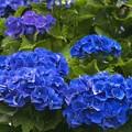 写真: コーポレートカラーはブルー type-a