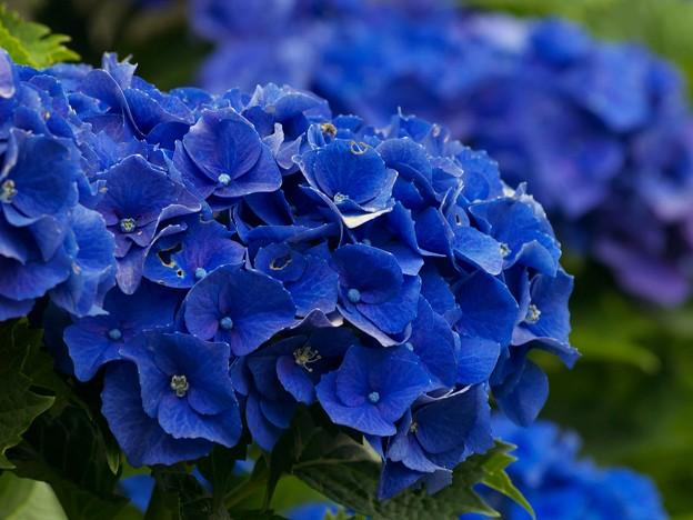 コーポレートカラーはブルー type-b