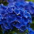 写真: コーポレートカラーはブルー type-b