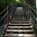 写真: ゆらゆら河津七滝の吊り橋