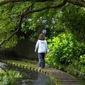写真: アジサイ咲く水辺の小径