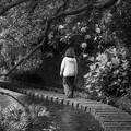 Photos: せせらぎを朝散歩