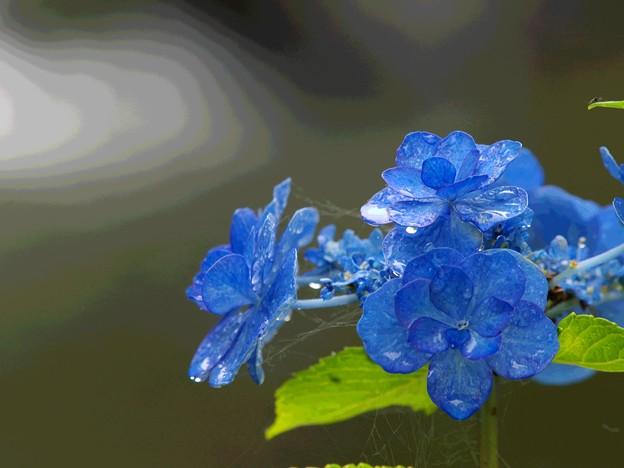 写真: せせらぎに咲く季節の碧
