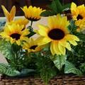 ランチタイムを彩る向日葵