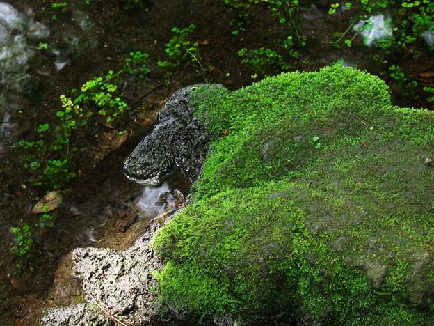 ワンちゃんな苔岩