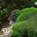 写真: ワンちゃんな苔岩