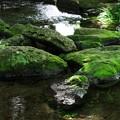 夏の木漏れ陽注ぐ水辺