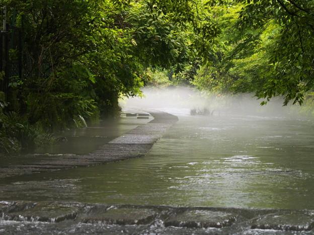 雨上がりの水辺