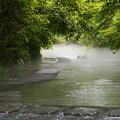 写真: 雨上がりの水辺