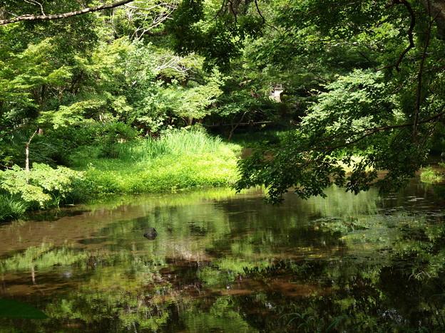 Photos: 湧水の郷