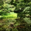 写真: 湧水の郷