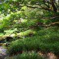 写真: 溶岩石に寄り添う樹木