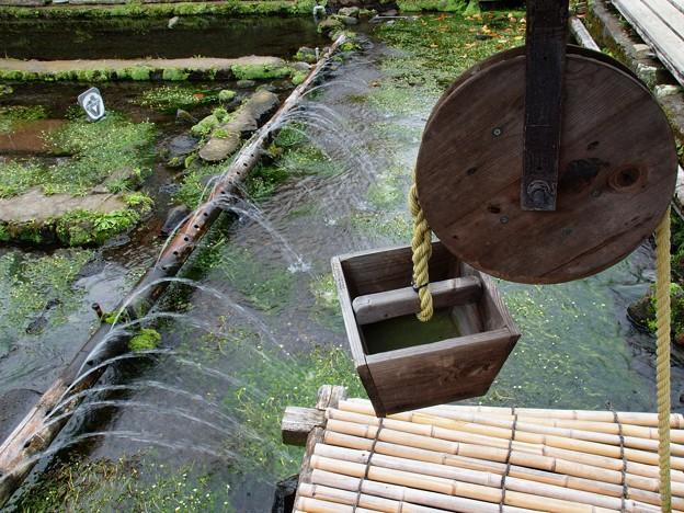 写真: 三島梅花藻の里