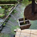 Photos: 三島梅花藻の里