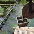 三島梅花藻の里