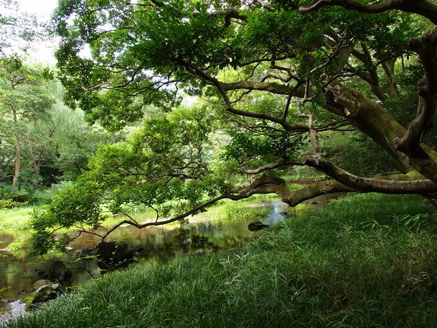 溶岩石に寄り添う樹木
