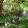 流れる湧水