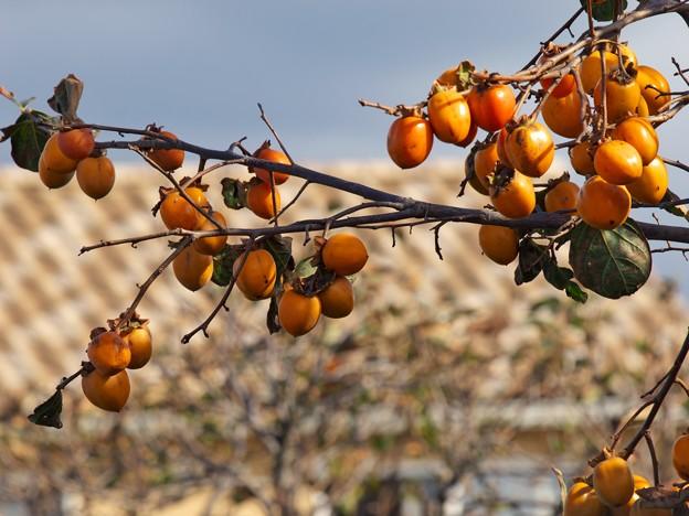 秋、収穫のとき