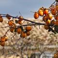 写真: 秋、収穫のとき