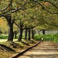 写真: 落ち葉散る桜並木を走る抜ける