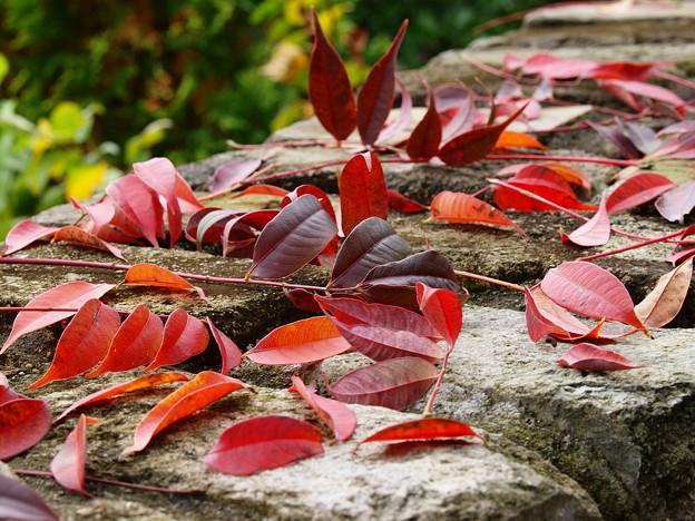石段は秋色