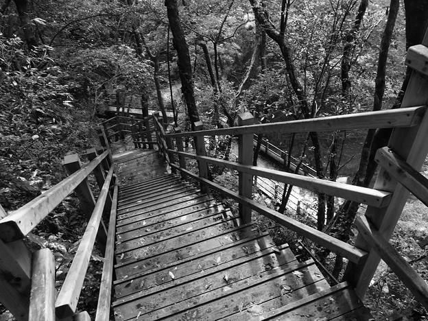 写真: 雨上がりの木階段