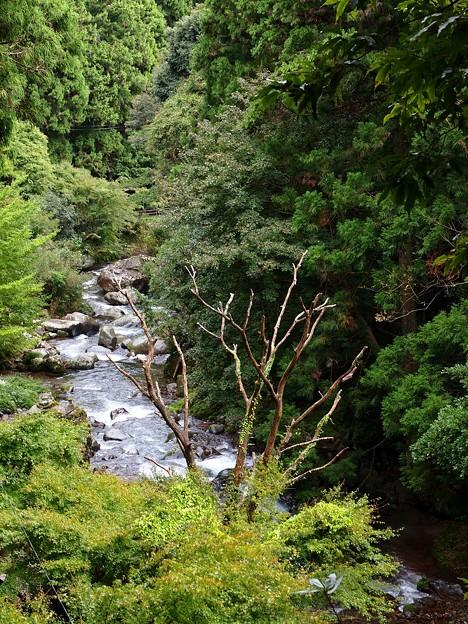 河津七滝の清流
