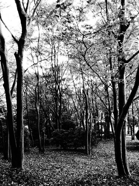 晩秋の木立
