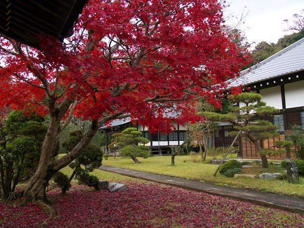 Photos: 晩秋の山寺