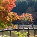 晩秋の太鼓橋