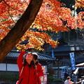 秋色を撮る
