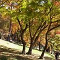 秋色を愛でる人たち
