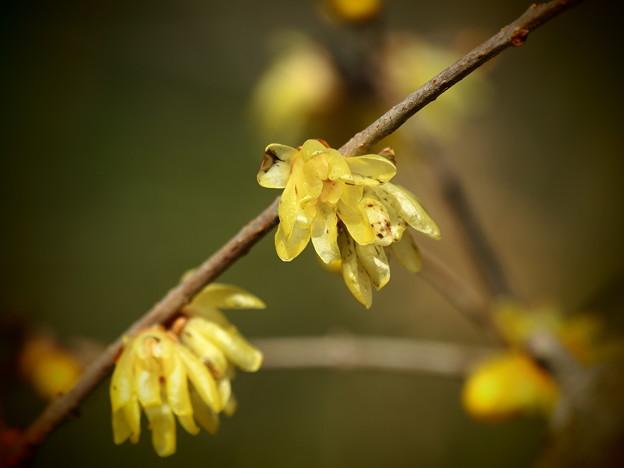 せせらぎに香る春の匂い