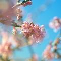 写真: せせらぎ公園の早春 -b