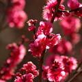 Photos: 早春に萌ゆる