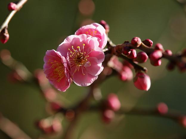 写真: 浴びる立春の陽射し