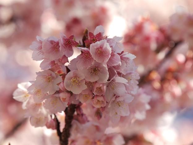 Photos: 桜ブーケ