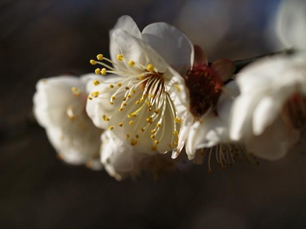 早春の陽光の輝き