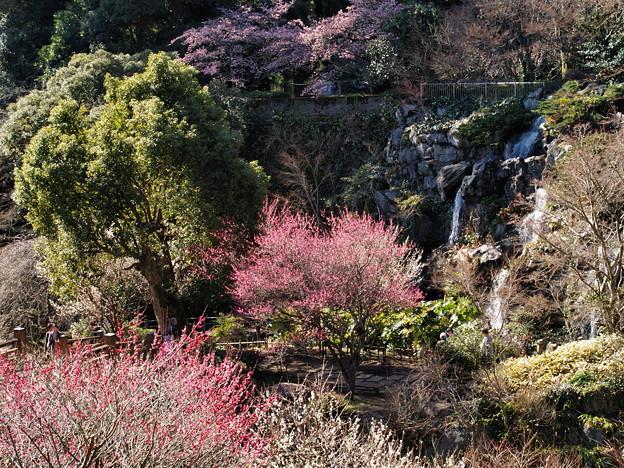 桜・梅・そして滝
