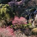 写真: 桜・梅・そして滝