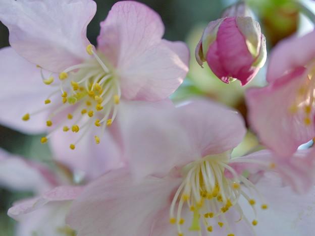 Photos: 春色ハルイロ