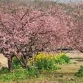 Photos: せせらぎ公園の春