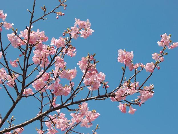 春を告げる青い空