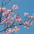 Photos: 春を告げる青い空